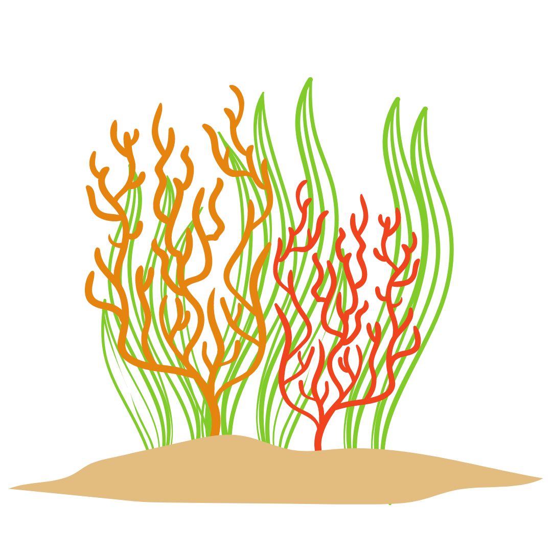 Red, peach and green Coral