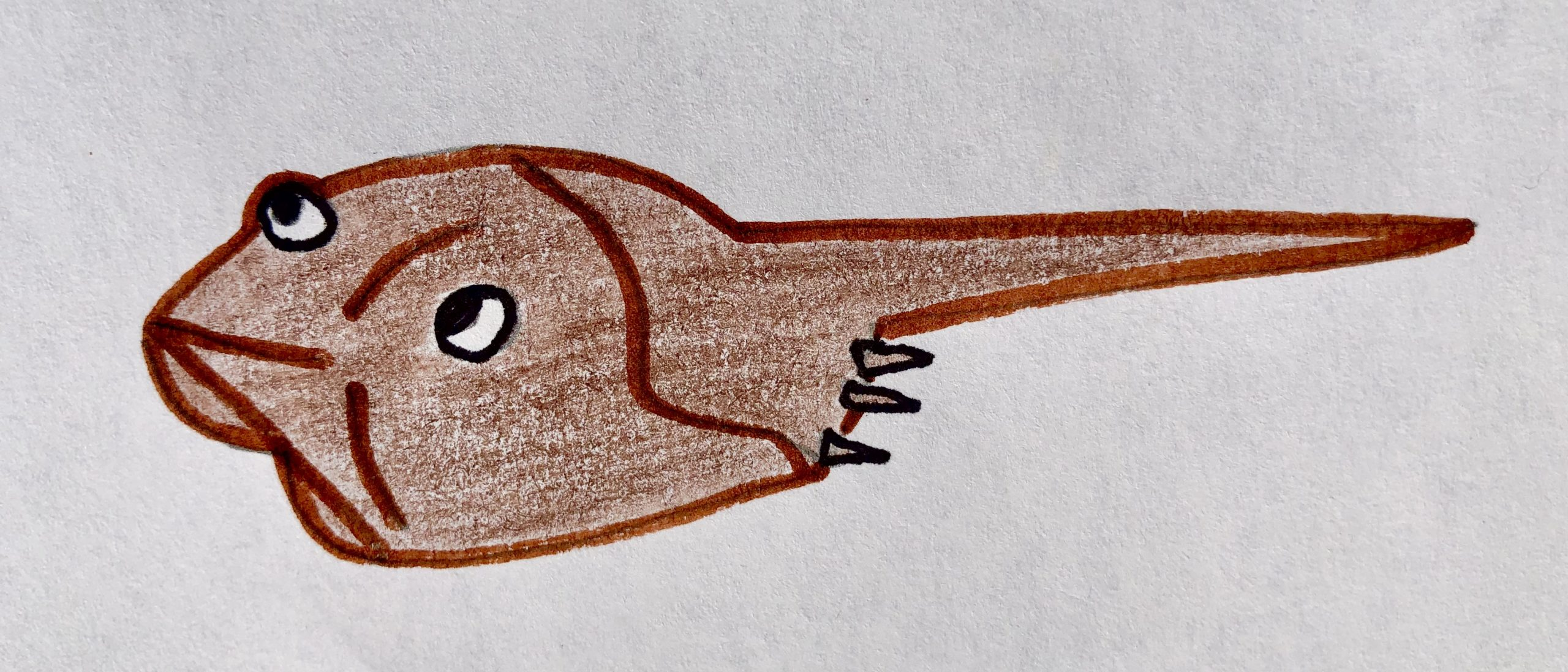 Drawing of a brown horseshoe crab for the children's story, The Very Brave Little Fish