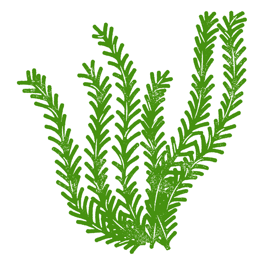 Seaweed for the children's story, The Very Brave Little Fish.