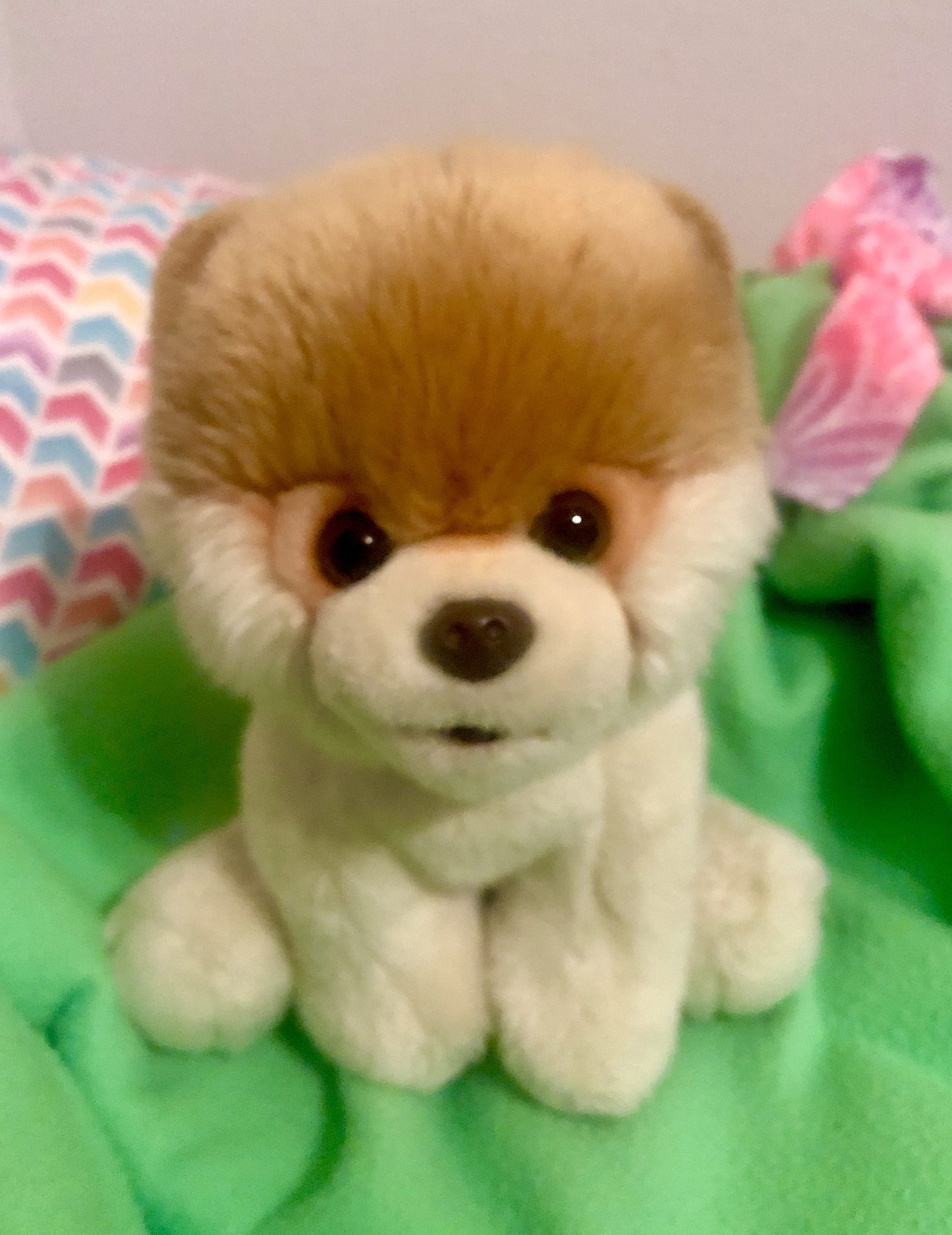 A Pomeranian dog stuffed animal named Buddy sitting on a lime green blanket. It's from the Case of the Stolen Stuffy- a mystery story for kids.