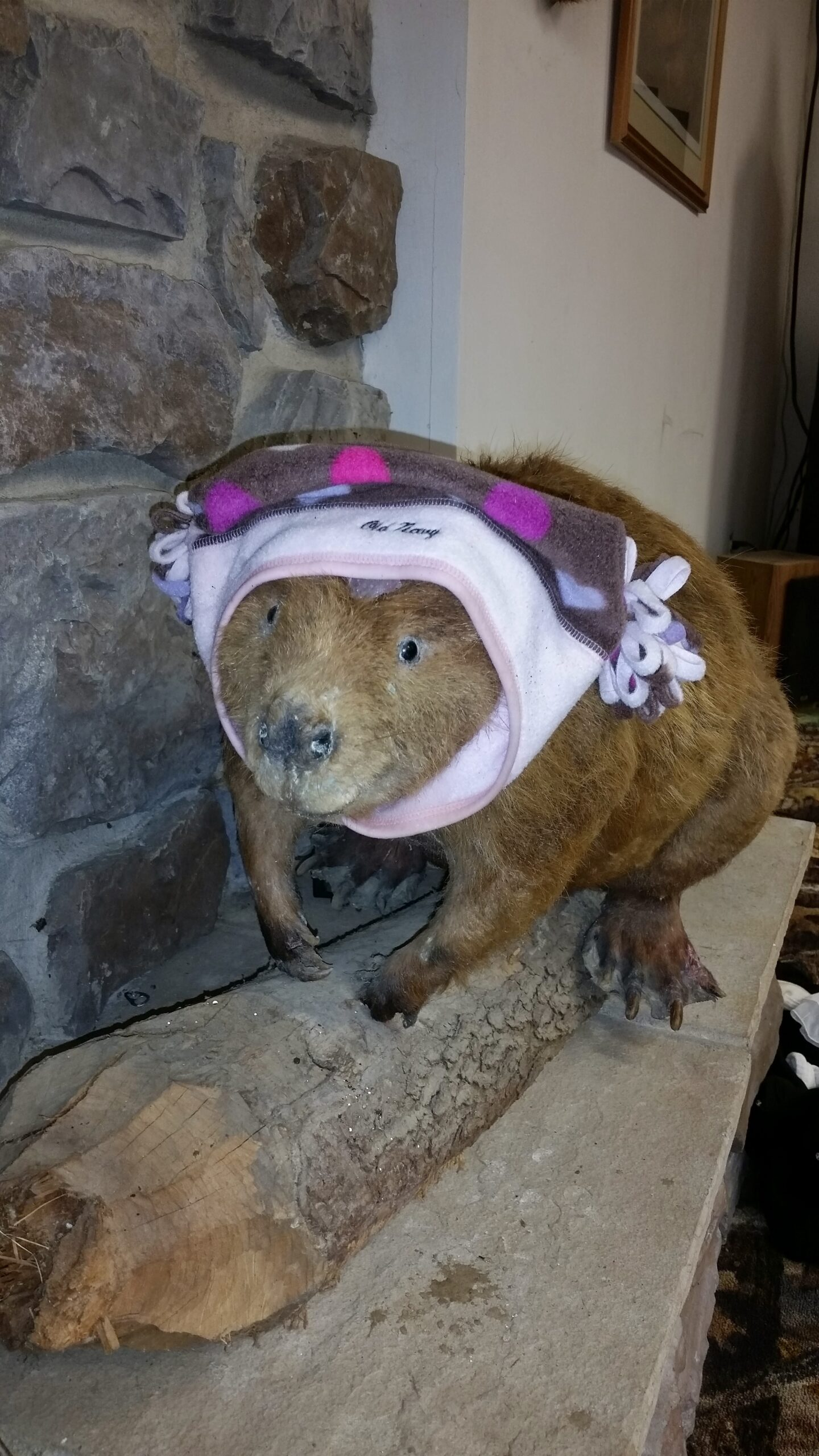 A stuffed Beaver for the holiday story, The Best Thanksgiving Ever!